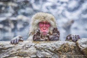 vicces majmos fotó