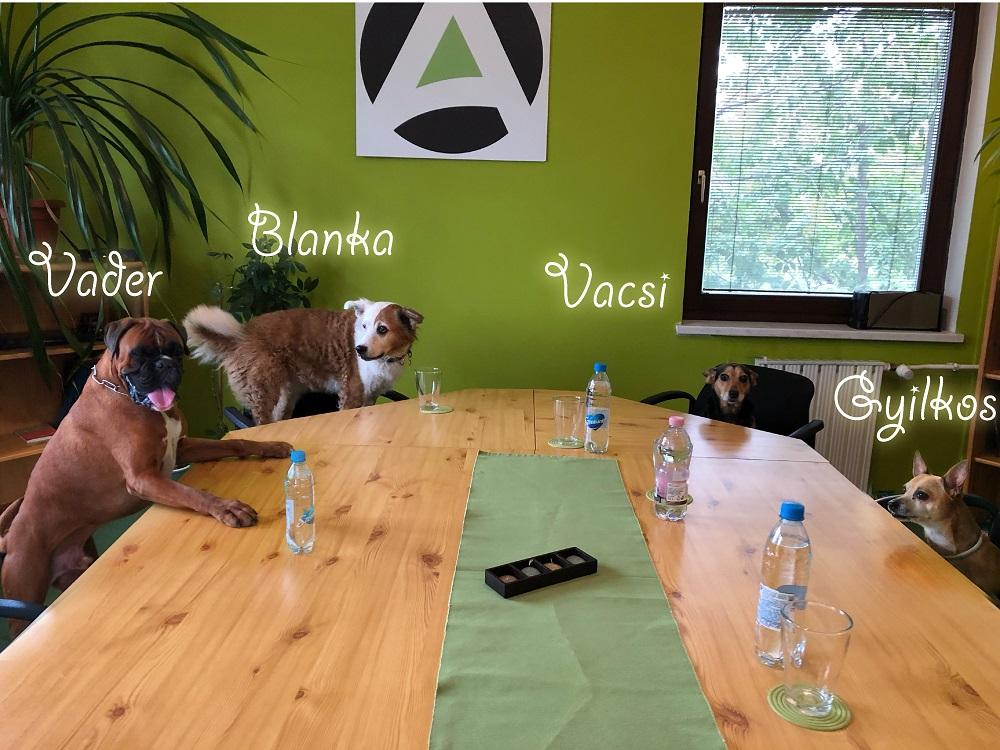 kutyabarát munkahely