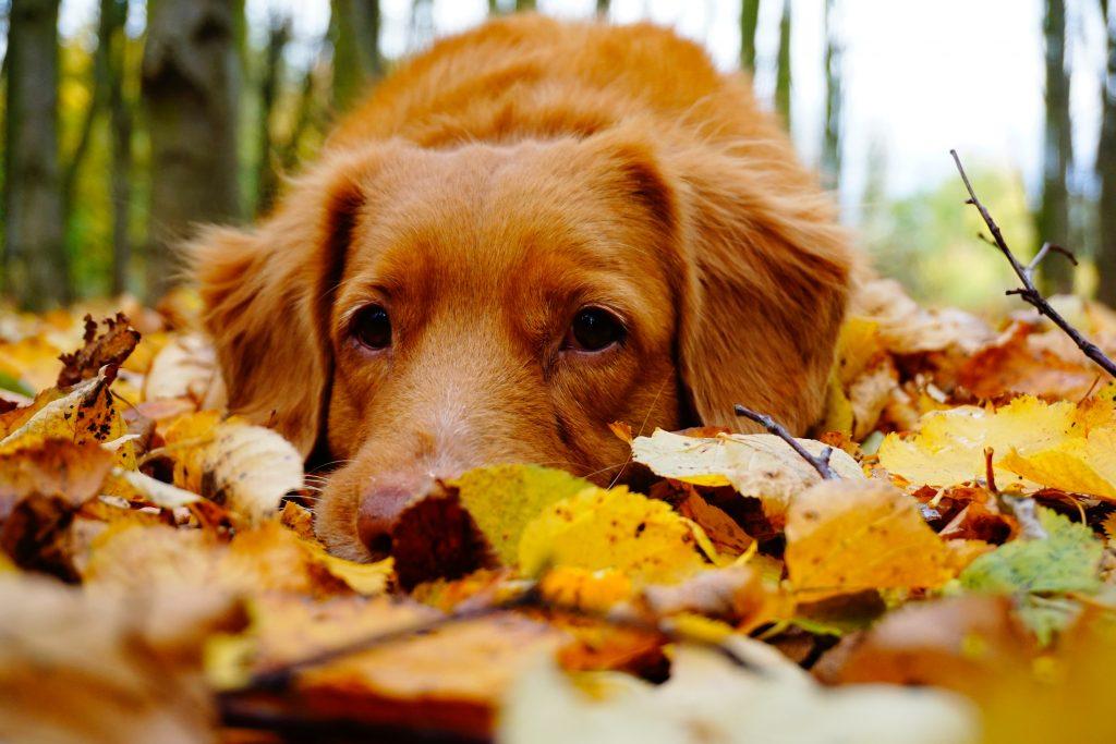 kutya falevelek ősz