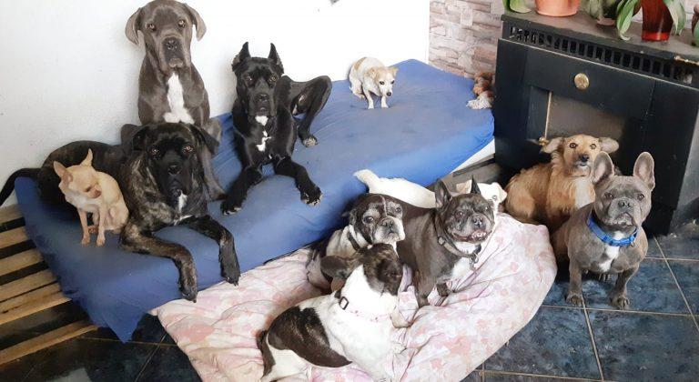 Vau-Haus Kisállatpanzió és Kutyanapközi
