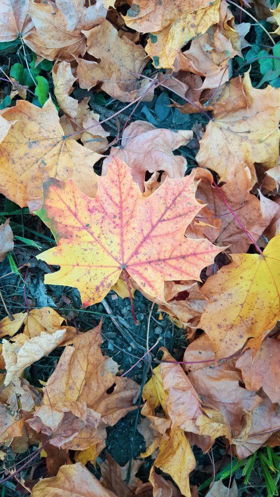 őszi levelek az erdőben