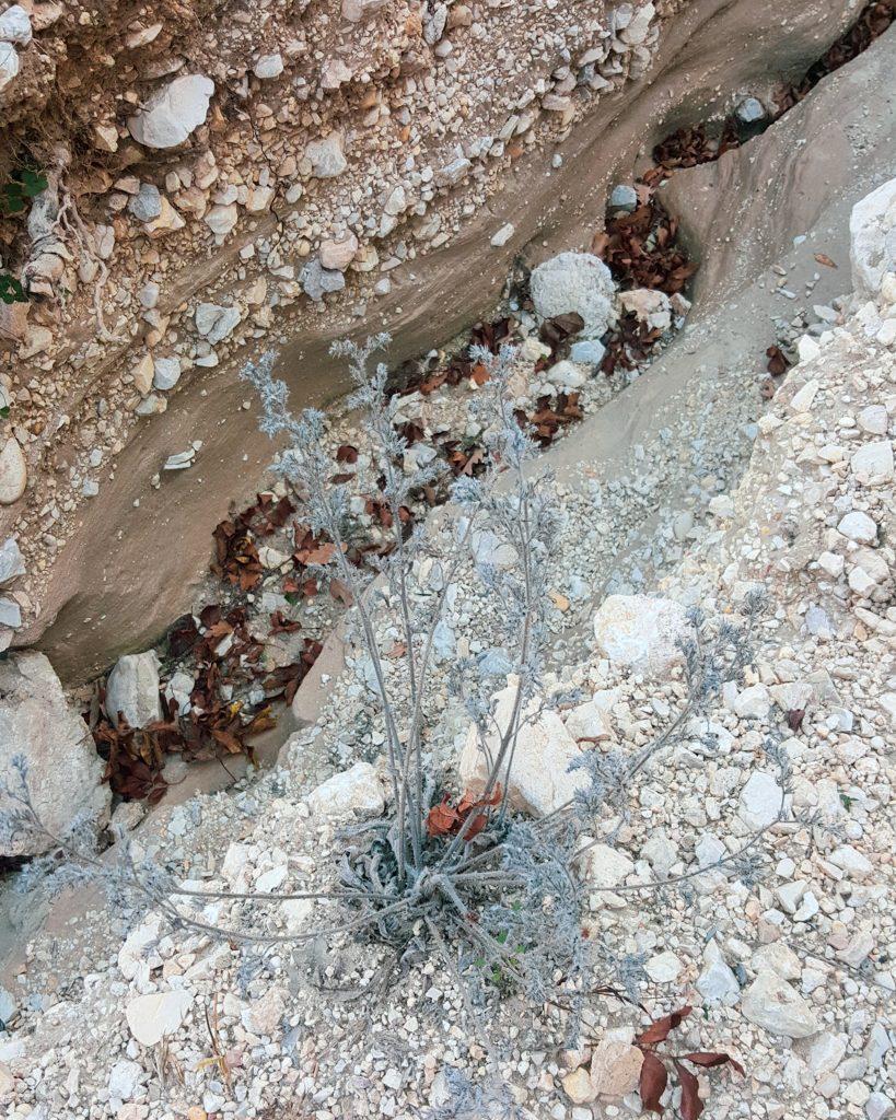 kavicsos, sziklás talaj