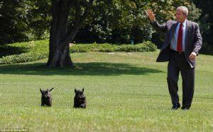 George W. Bush elnök két kutyájával