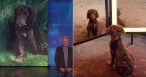 Ellen DeGeneres mentett kutya - talk show