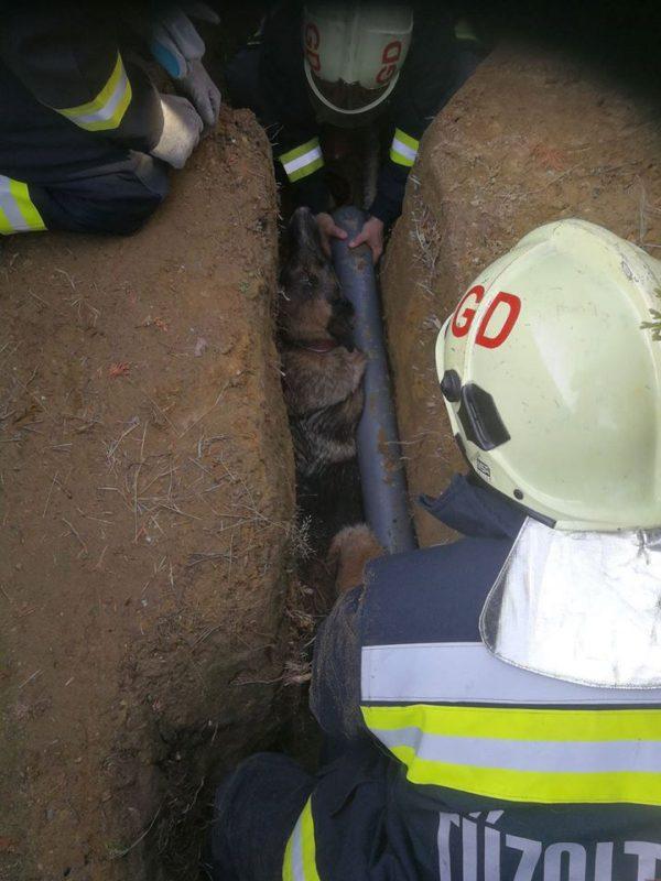Tűzoltók mentettek kutyát