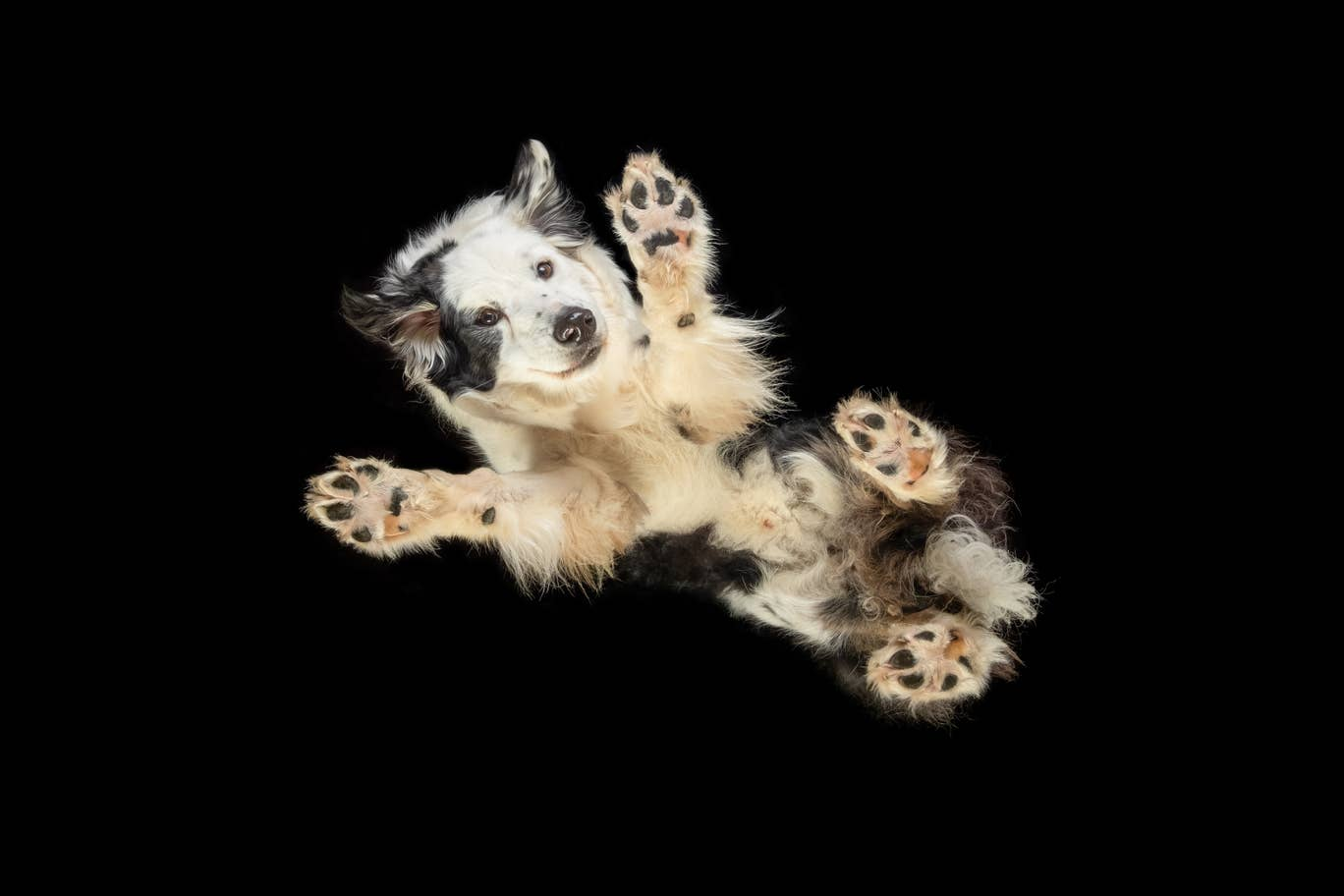 Fantasztikus kutyafotók egy egészen új perspektívából