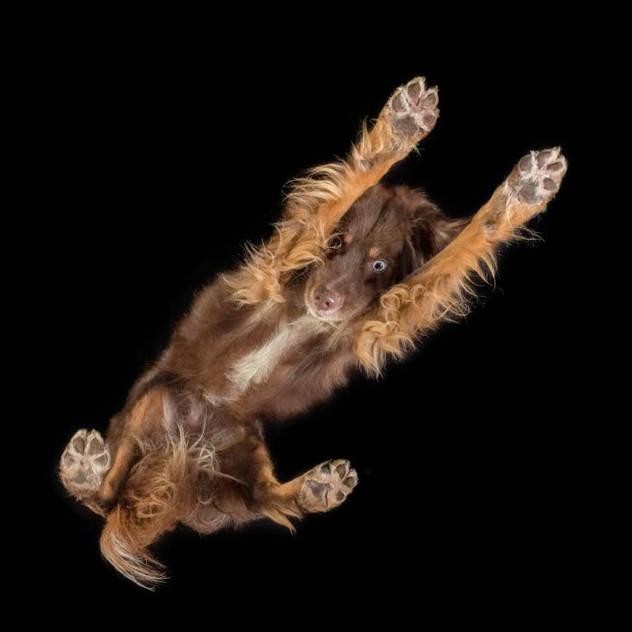 kutya fotózás üvegen