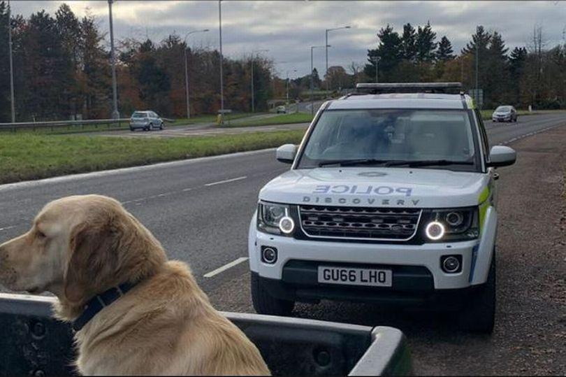 Ezért büntetnek meg kutyát szállító autósokat