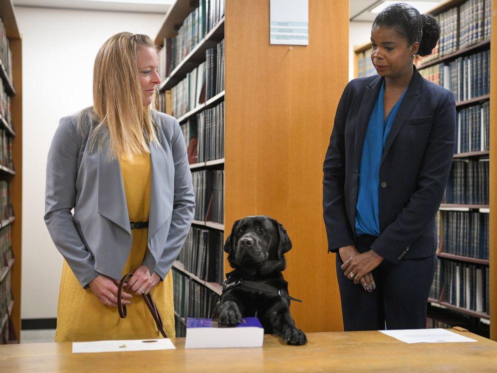 hivatali esküt tett a segítő kutya