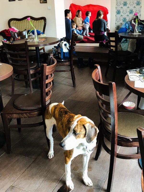 hosszú kávé kutyabarát