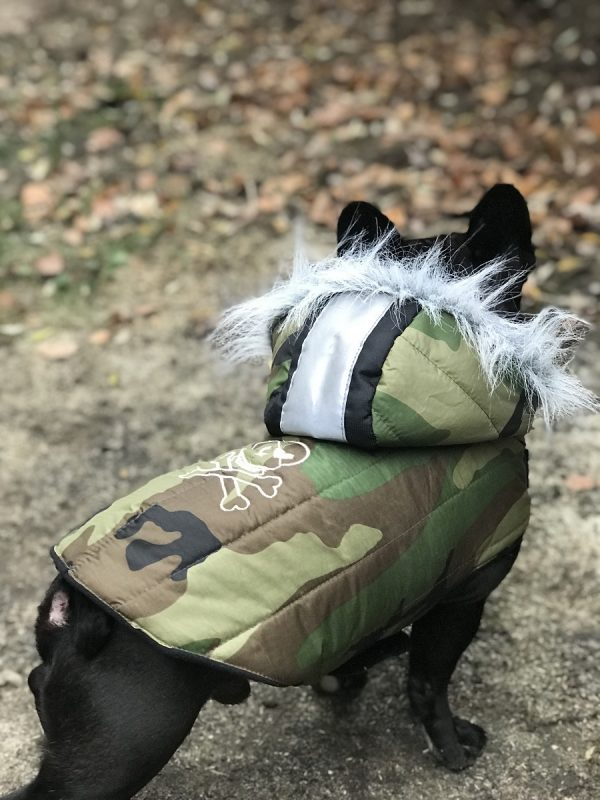 koti kutyaruha