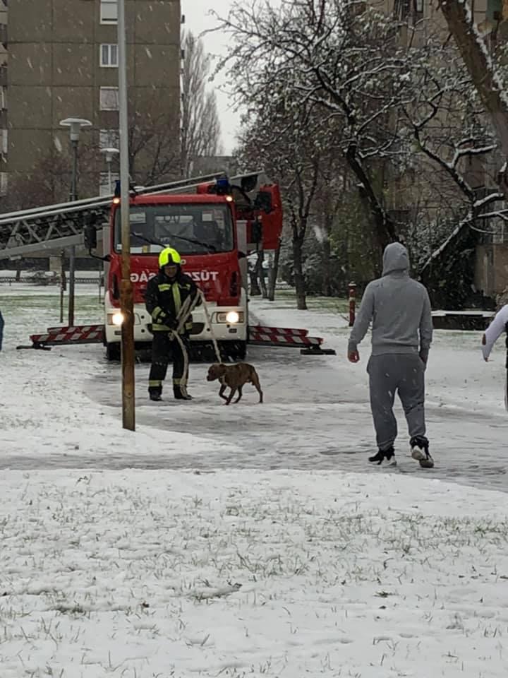 kutyát mentettek