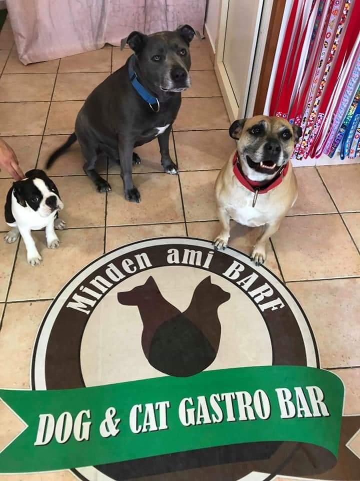 Dog&Cat Gastro Bar