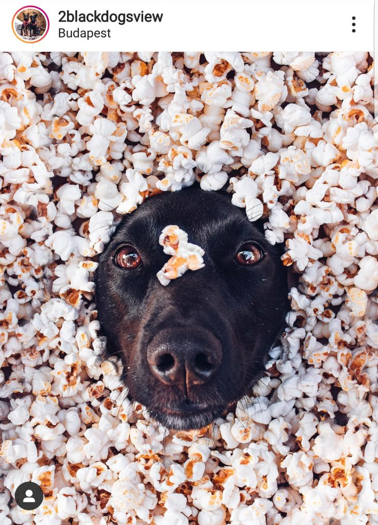 popcorn és kutya