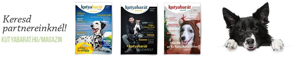 kutyabarat magazin banner