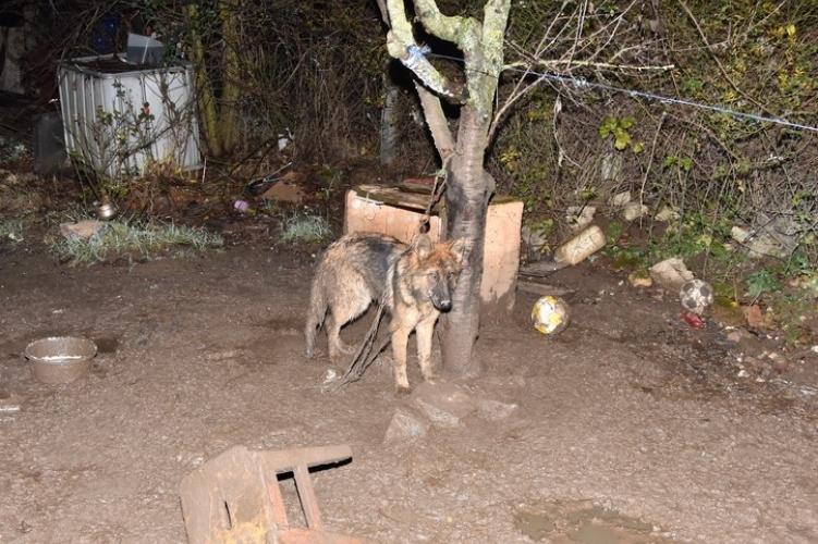 Láncon tartott kutya