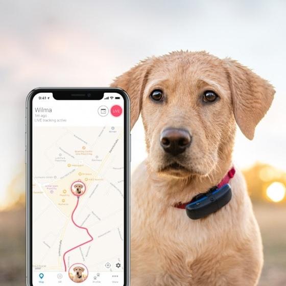 GPS nyakörvek fajtái