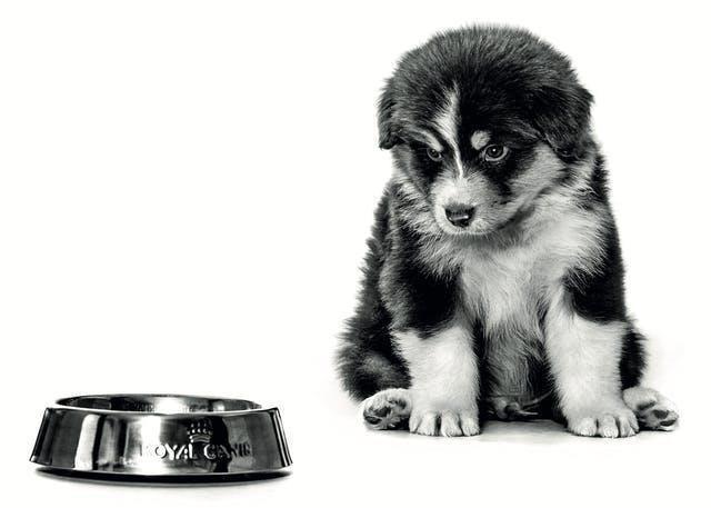 Royal Canin egészséges táplálás