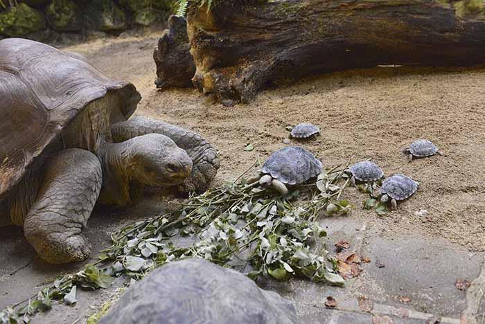 galapagosi teknős