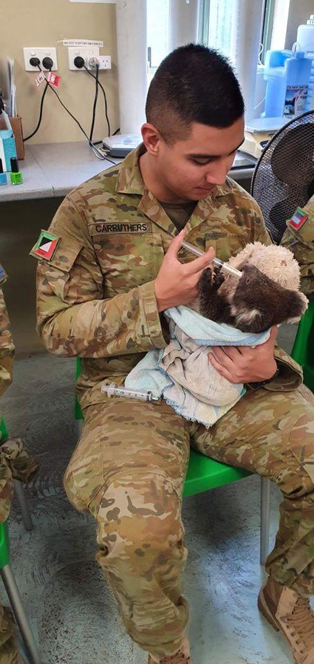 Szabadnapos katonák segítenek a koalák ápolásában. Fotó: