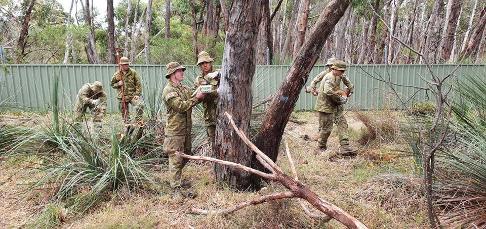 Ausztrál katonák segítik az erdő helyreállítását