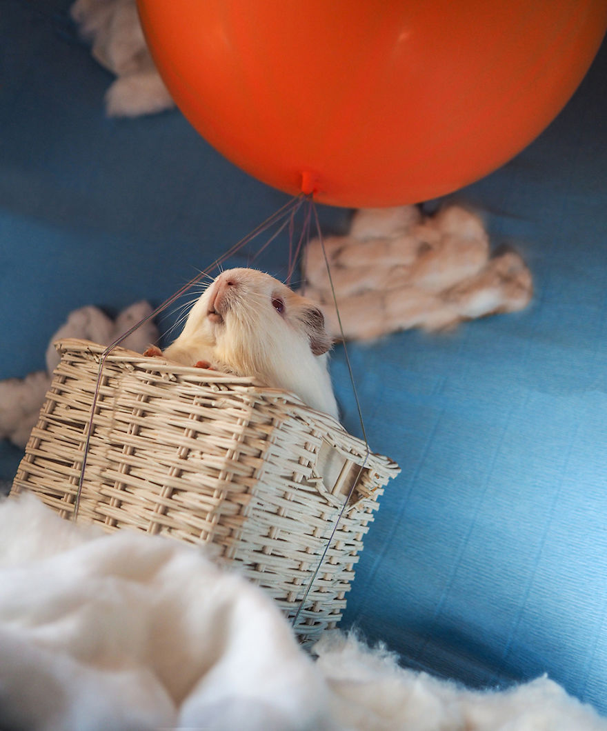Rachele Totaro laboratóriumi állatokat fotóz