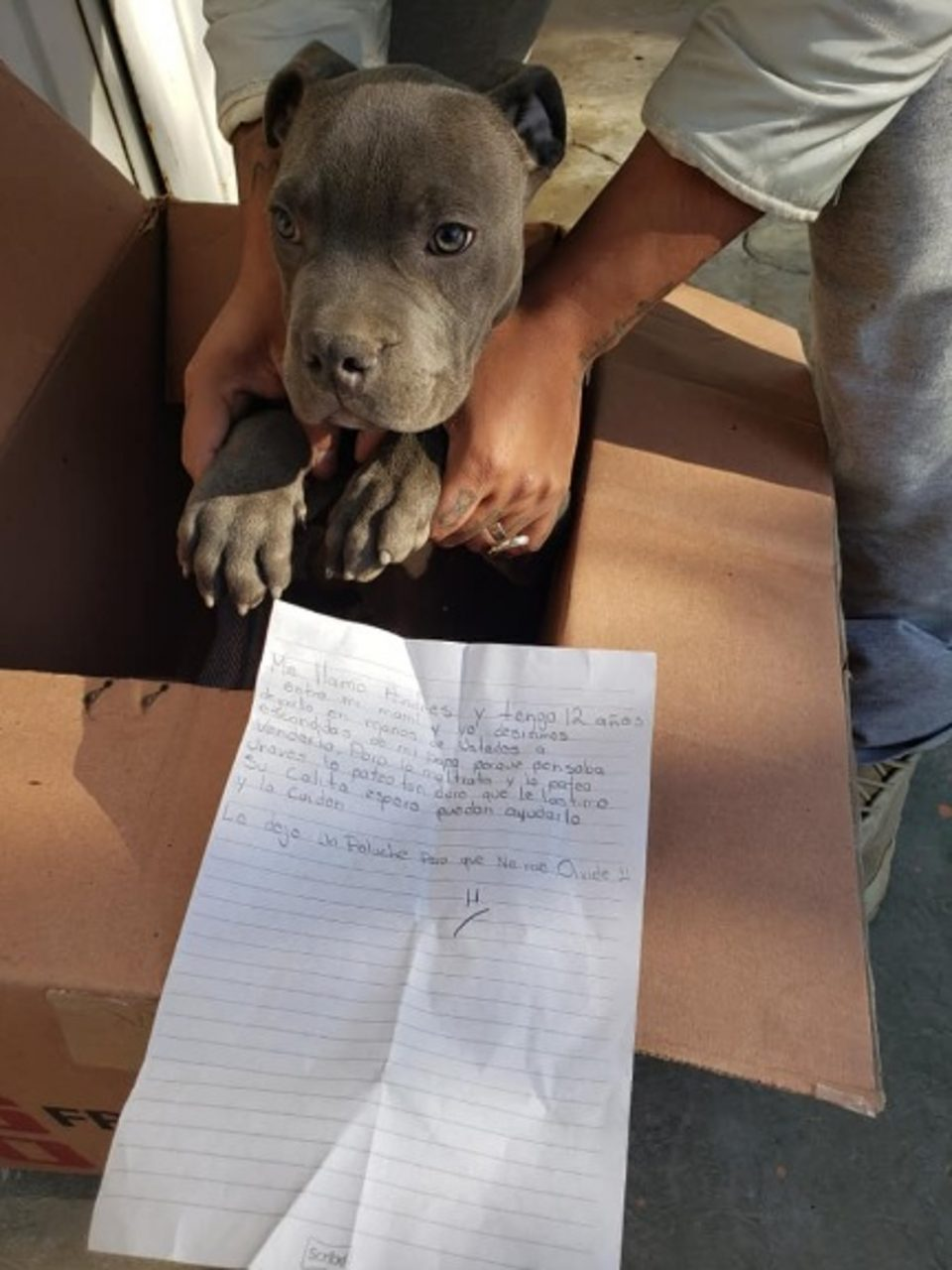 pitbull kölyköt hagytak a menhely előtt egy levéllel
