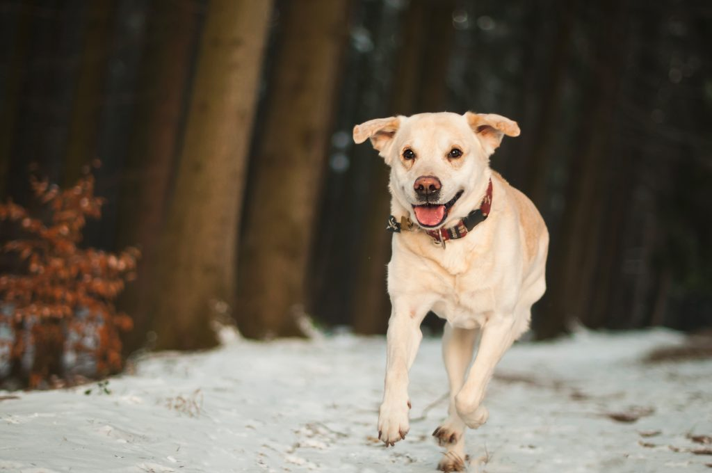 babéziozis kutya télen
