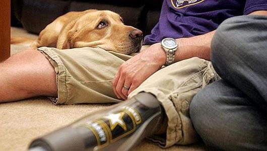 érzelmi támogató kutya