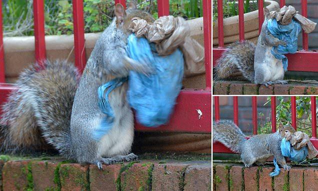 mókus műanyag hulladékból készít fészket