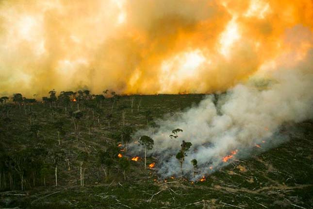 pálmaolaj termeléshez pusztítják az esőerdőt