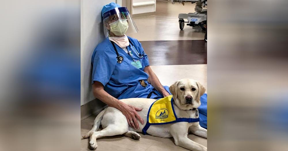 Wynn a terápiás kutya segíti gazdáját