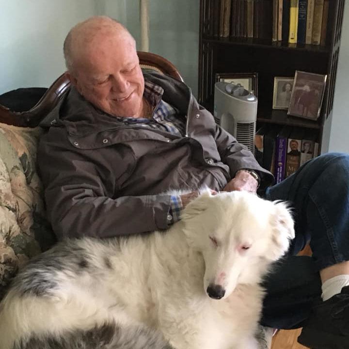 Willow a vak és süket terápiás kutya