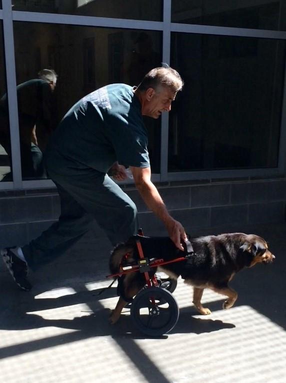 Börtönben trenírozzák a lebénult kutyát