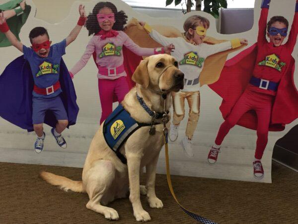 Jordan a terápiás kutya otthonról dolgozik