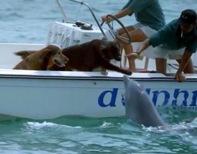 delfin üdvözli a kutyákat