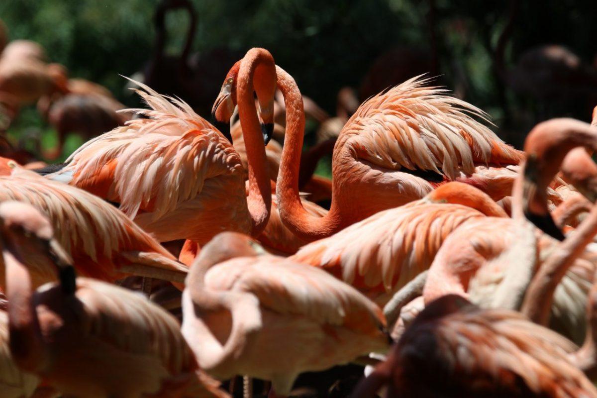 a flamingók egy életre kötnek barátságokat