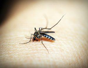 természetes szúnyogriasztó