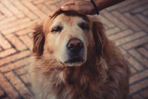 idős kutya gyász