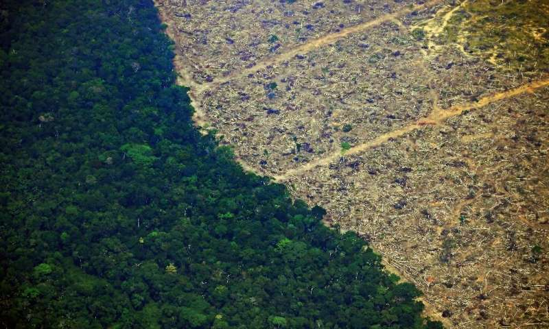 esőerdők pusztulása