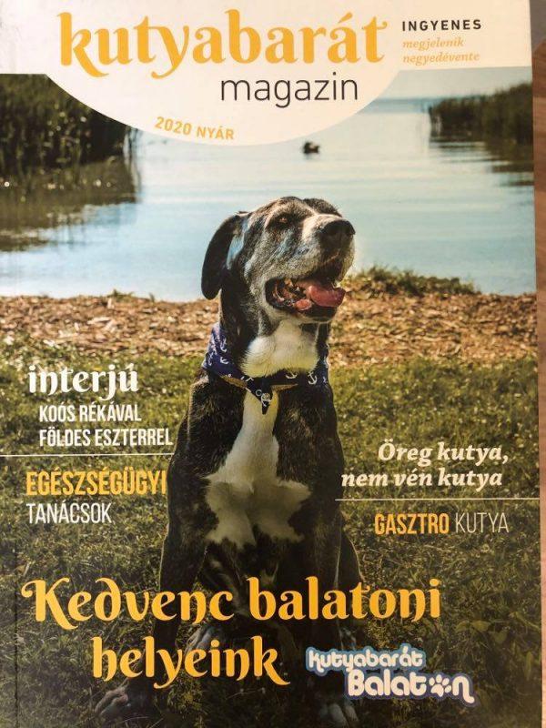 Kutyabarát magazin nyár