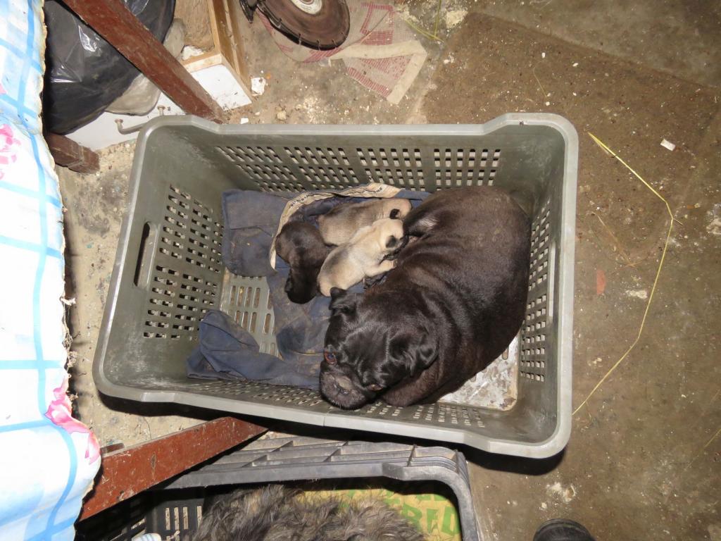 állatkínzás