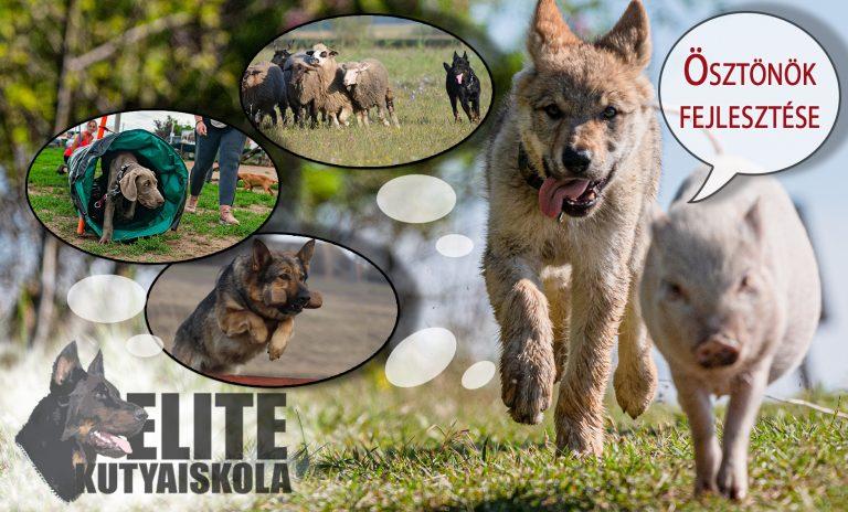 Elite kutyaiskola