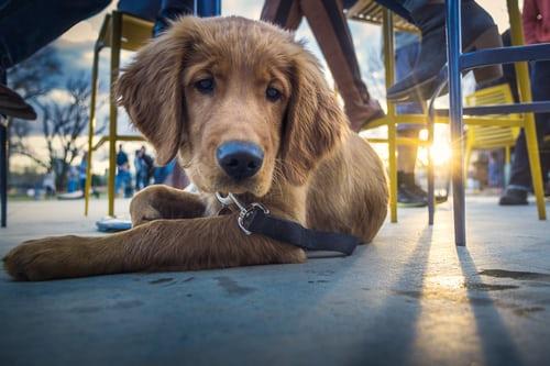 kutyabarát helyek