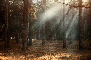 erdőjárás vadászat