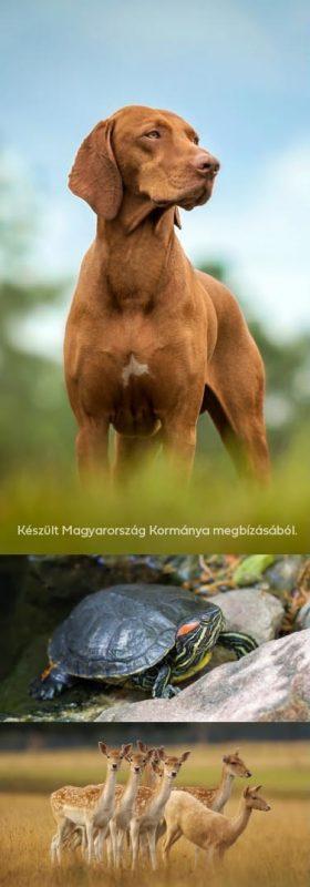 Állatvédelem bal