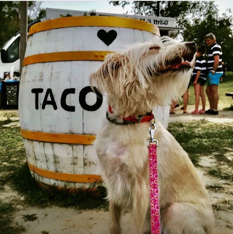 tacotruck tacobar